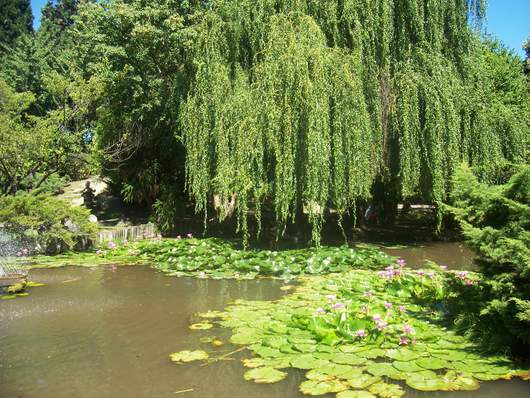 Los bellos paisajes de japon taringa for Paisajes de jardines